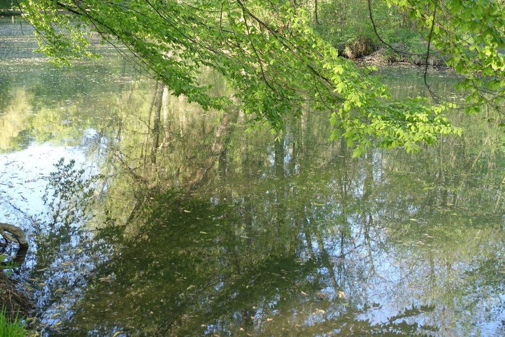 Zauberhafte Weiher im Englischen Garten